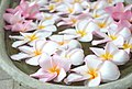 Araliya Flower.jpg