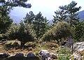 Arifköy, Finike - panoramio.jpg