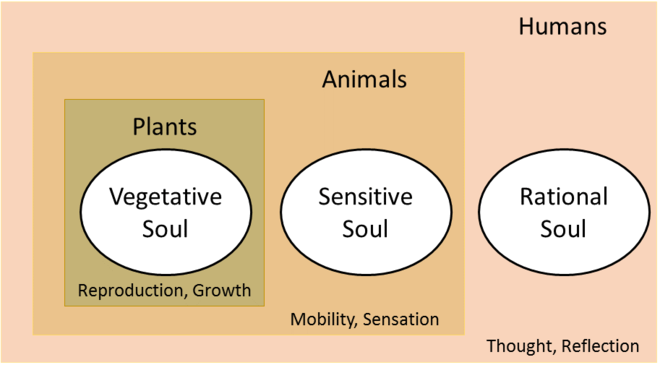Aristotle proposed a three-part structure for souls of plants, animals, and humans, making humans unique in having all three types of soul. Aristotelian Soul.png