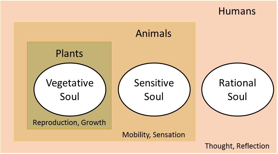 Aristotelian Soul