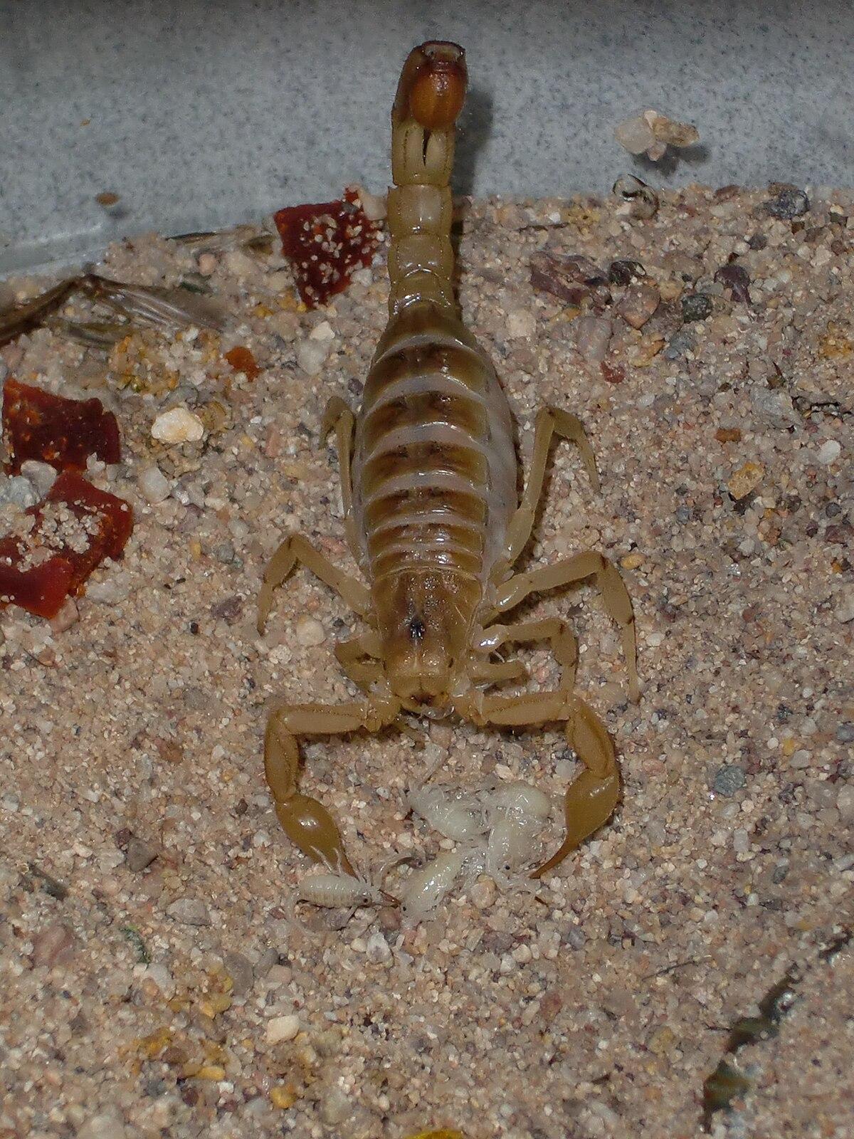 Bed Bugs Arizona Biltmore