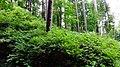 Arkhangelskoye, Moskovskaya oblast', Russia - panoramio (24).jpg