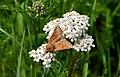 Artenvielfalt im LSG Oldhorster Moor 17.jpg