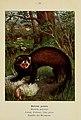 Atlas de poche des mammifères de France, de la Suisse romane et de la Belgique (Pl. 33) (6312168582).jpg
