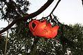 Auckland Lantern Festival (4468892744).jpg
