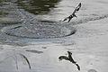 Austin Roberts Bird Sanctuary-049.jpg
