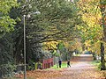 Autumn colours on Putney Park Lane - geograph.org.uk - 1561520.jpg