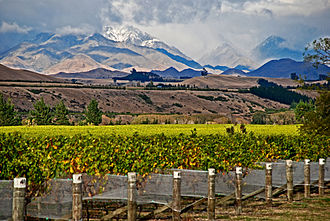 Agriculture in New Zealand - Vineyard in Marlborough