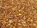 Autumn leaves 00.jpg