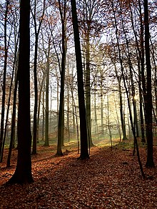 Autumn light in the Sonian Forest.jpg