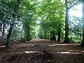 Avenue of trees to Shotover House - geograph.org.uk - 538547.jpg