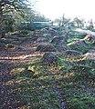 BMX Track, Grove Woods - geograph.org.uk - 294156.jpg