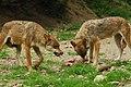 BOREON Deux Loups. (2710505626).jpg