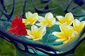 Bali 023 - Ubud - pretty flowers.jpg
