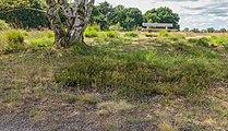 Balloërveld, natuurgebied in Drenthe 37.jpg