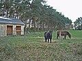 Balnaspirach Ponies - geograph.org.uk - 277700.jpg
