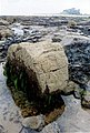 Bamburgh Castle Harkness rocks - geograph.org.uk - 1312816.jpg