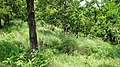 Bandipur Tiger Reserve @ Gopal Swami Betta - panoramio (2).jpg