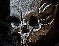 BanpoSkull.jpg