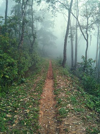 Serra do Gandarela National Park - The forest near Nova Lima