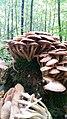 Baumberge, Pilze, Herbst, Wald, Moos, Bäume.jpg