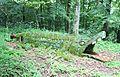 Baustert (Eifel); Waldkrokodil a.jpg