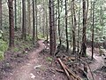 Bearback trail switchbacks - panoramio.jpg