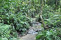 Beautifully wooded terrain for the rescued bears (14418955319).jpg