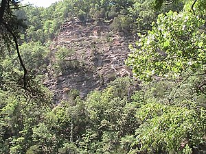 Bee Cliff (Tennessee) - An upper section of the Bee Cliff approximately 100 meters above and adjacent to the Watauga River.