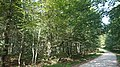 Beech forest in Monte Santiago natural Monument 2, Burgos (Spain).jpg