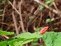 Beetle on a plant.jpg