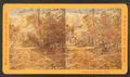 Belmont Glen, by Cremer, James, 1821-1893 2.png