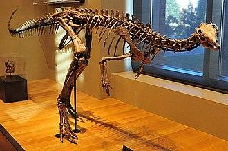 Dryosaurus - D. altus, Beneski Museum of Natural History