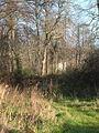 Berryhead Plantation - geograph.org.uk - 289083.jpg