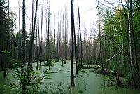 Białowieski park narodowy 06.jpg