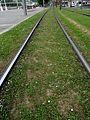 Bilbao - Tranvía - Bilbo - Tranbia (24800750572).jpg
