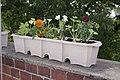 Biologisch abbaubarer Blumenkasten aus Altpapier - Raupe.jpg