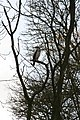 Bird in a tree - geograph.org.uk - 1220870.jpg