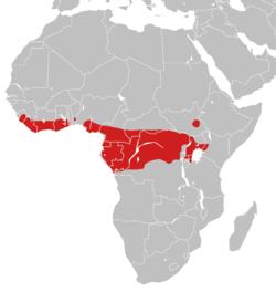 Répartition de la vipère rhinocéros.