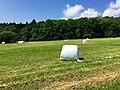 Blick auf das Naturschutzgebiet Finkenberg-Lerchenberg - panoramio (2).jpg