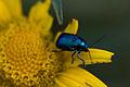 Blue & Yellow (631803203).jpg