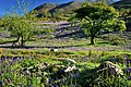Bluebells in Rannerdale. - panoramio.jpg