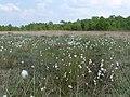 Bockholter Dose, Naturschutzgebiet WE 138.jpg