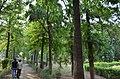 Bodhgaya (8717524484).jpg