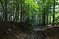 Bois du Pottelberg - Pottelbergbos 04.jpg