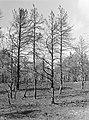 Bosbranden , de dellen, vliegdennen, Bestanddeelnr 192-0334.jpg
