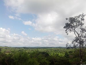 Cerros de Amotape National Park - Tropical dry forest in the region of Tumbes during rainy season.