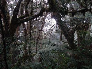 Amboró National Park - Cloud forests occur at higher elevations.