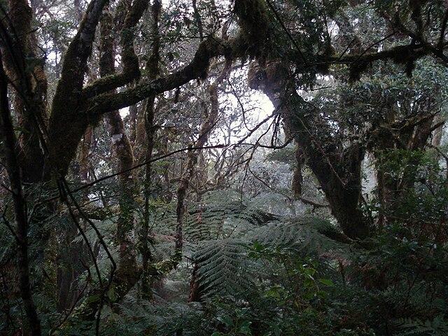 Parc national Amboró