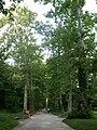 Botanical garden in zugdidi(11).jpg